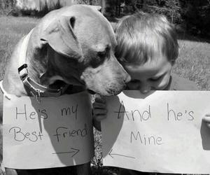dog, best friends, and friends image