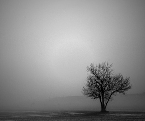 black and white, photography, and tree image