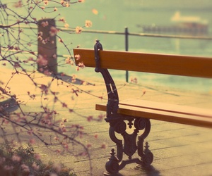 bench, flowers, and photography image