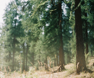 nature, forest, and summer image