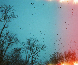 birds, cold, and lens image