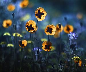 beautiful, nature, and bokeh image