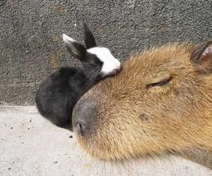 animal and sleep image