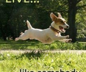 dog, live, and funny image