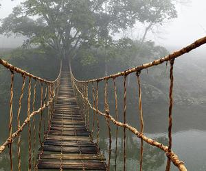 bridge, nature, and tree image