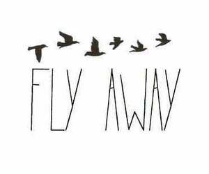 birds, quote, and fly image