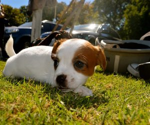 adorable, puppys, and animal image