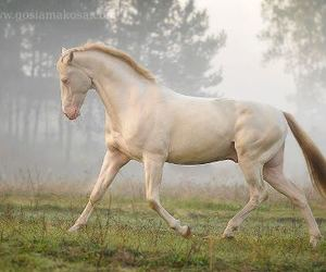 beautiful, horse, and nice image
