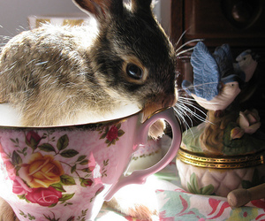 rabbit, bunny, and cup image