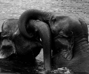 elephant, water, and love image