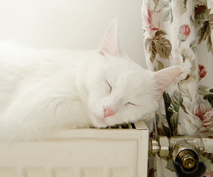 floral, cat, and white cat image