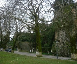 autumn, trees, and castle image