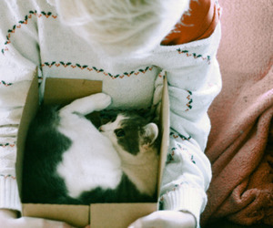 cat, box, and photography image