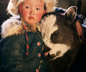 cow, animal, and child image