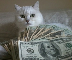 cat, money, and pale image