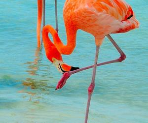 bird, flamingos, and nature image