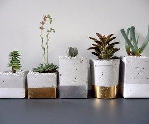 plants, cactus, and decor image