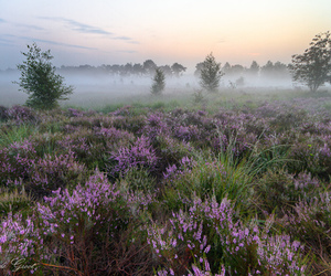 field, nature, and Wild Flowers image