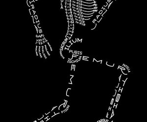 bones, skeleton, and anatomy image