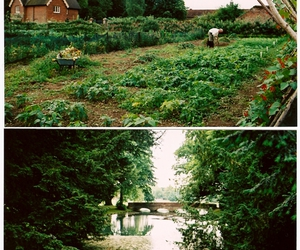 !green, garden, and nature image