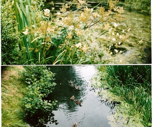 animals, duckling, and water image