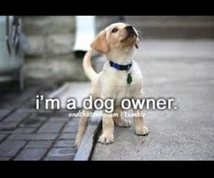 dogs, and thats who i am, and pets image