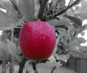 apple, black and white, and rain image