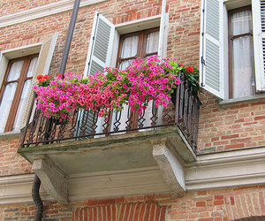 flowers, balcony, and building image