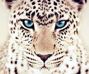 animal, blue, and cheetah image