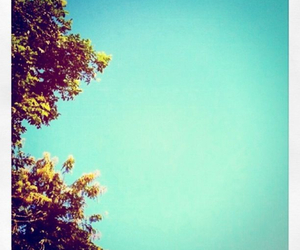 blue, photography, and tree image