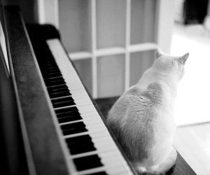 cat and piano image