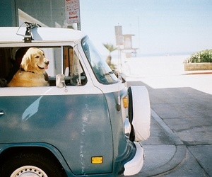 dog, car, and animal image