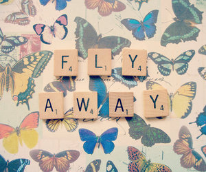 fly, butterfly, and quote image