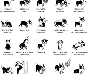 dog, language, and funny image