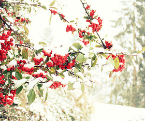 berries, snow, and photography image