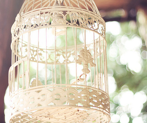 vintage, bird, and cage image