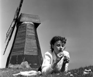 audrey hepburn, actress, and pretty image