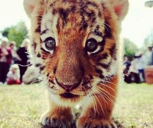 animal, want, and baby image