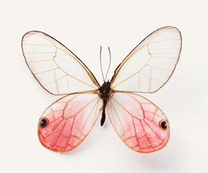 butterfly, pink, and nature image