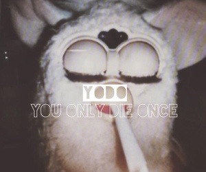 furby, yolo, and indie image
