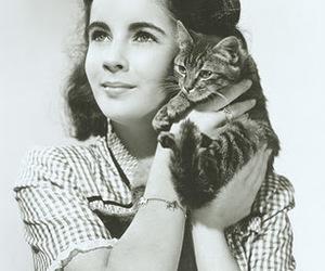 cat and Elizabeth Taylor image