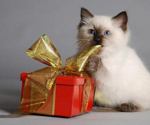 cat, gift, and kitten image