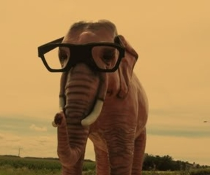 elephant, glasses, and cute image