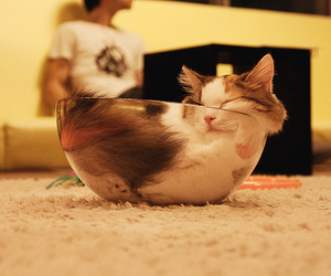 cat, cute, and bowl image