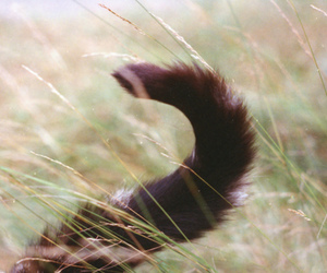 cat, kitty, and tail image