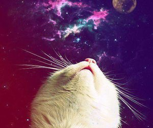 cat, galaxy, and moon image