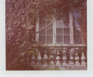 polaroid and window image