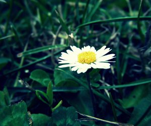 fleur, flower, and nature image