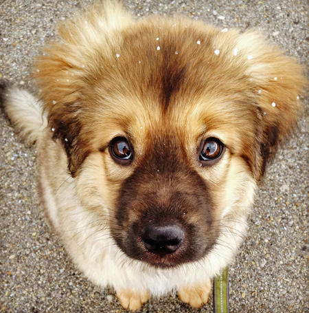 beorn the mixed breed puppies daily puppy