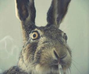 rabbit, smoke, and bunny image